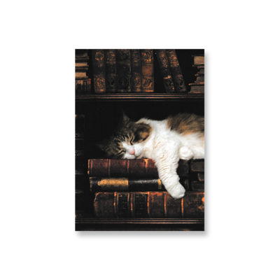 POSTKARTE Katze im Bücherregal