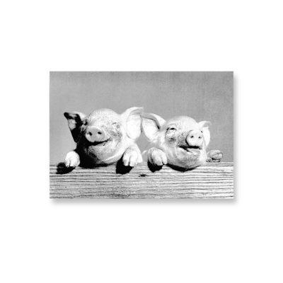 POSTKARTE Zwei Schweinchen