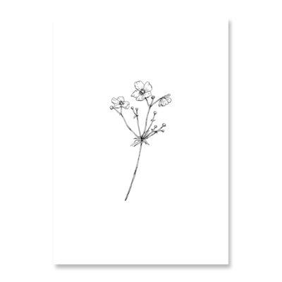 INKYLINES Postkarte Anemone