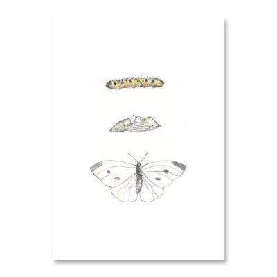 POSTKARTE Inkylines Schmetterling mit Larve
